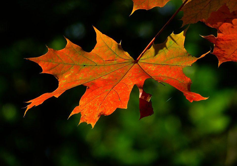 Het wordt weer herfst!